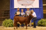 Reserve Intermediate Calf Champion<br>WPR's AnnaBelle