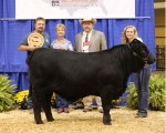 Reserve Intermediate Champion Bull<br>WPR's Lady's Package