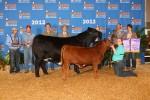 2012 Houston Livestock Show
