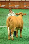 Alex Jurica and her heifer, Lil Miss Swagger