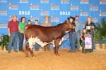 Reserve Calf Champion<br>Tassin Family
