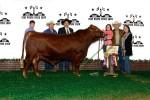 Grand Champion Bull<br>#118 Sage McManus