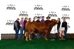 Reserve Grand Champion Bull<br>#121 Rafter G Bar Beefmasters