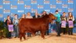 2013 Houston Livestock Show