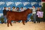 2013 San Antonio Stock Show