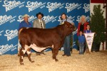 Reserve Grand Champion Bull<br>EMS Smooth Bo