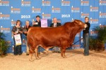 2014 Houston Haltered Sale