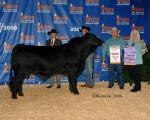 Lot 5<br>Semen from EMS Johnny Cash [deceased]