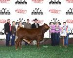 Reserve Champion Bull<br>#74 Wallen Prairie