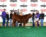 Reserve Champion Bull<br>Lillian Hettinger